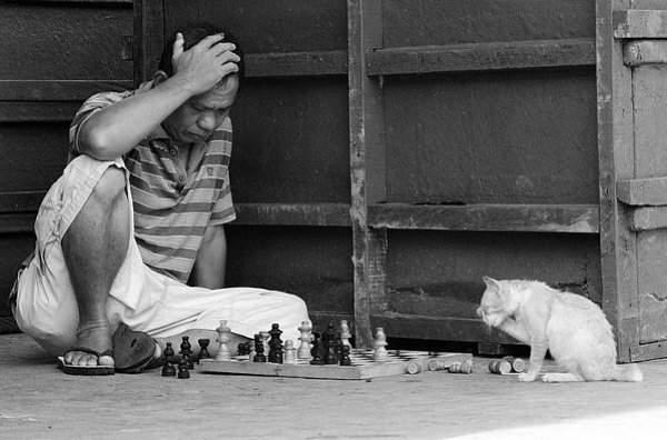 chat-et-homme-jouant